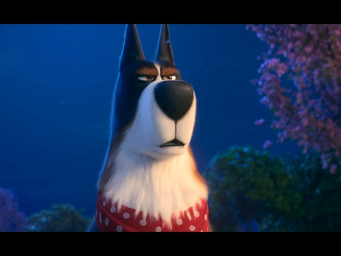 Trailer for The Secret Life of Pets 2